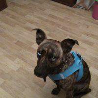 Busco una familia para mi perro