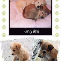 Cachorros perro en adopcion